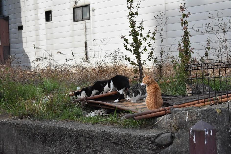 鴨川側のネコ