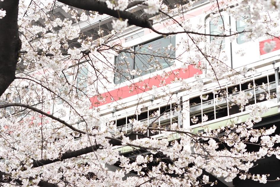 桜と東急線