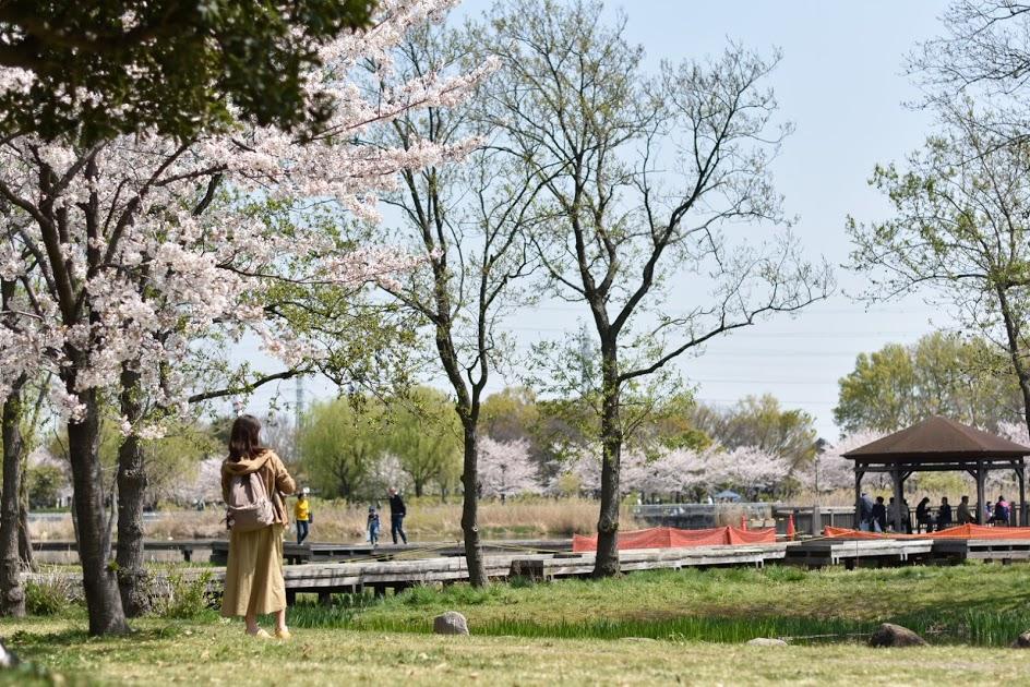 舎人公園の桜とお姉さん