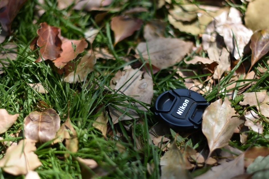 舎人公園の芝生