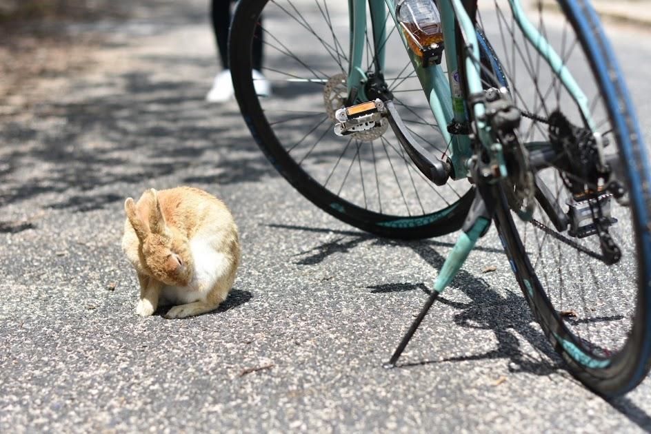うさぎと自転車