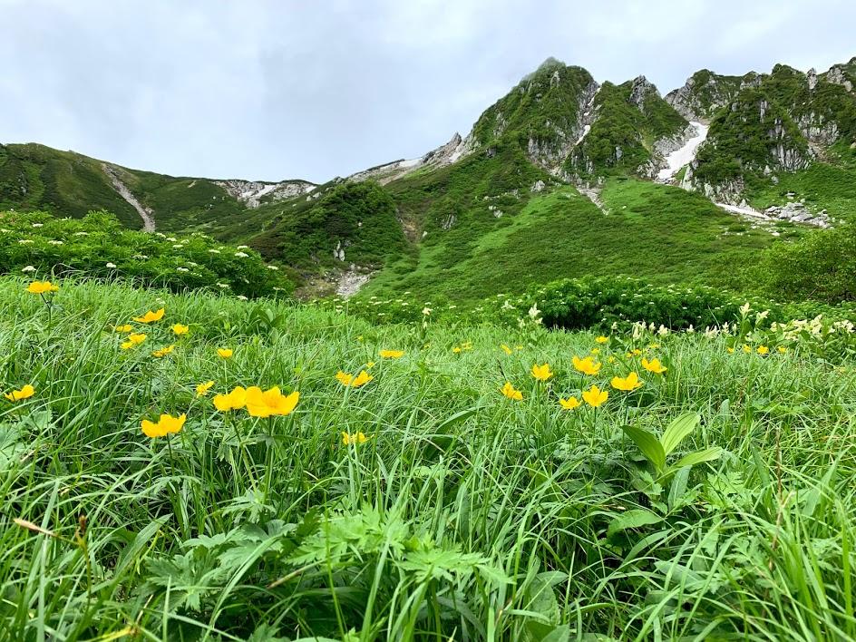 花も咲く千畳敷カール