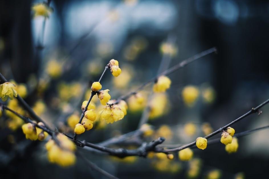 ぼたん苑の何かの花