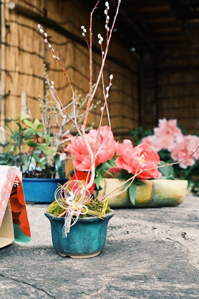 ぼたん苑の花