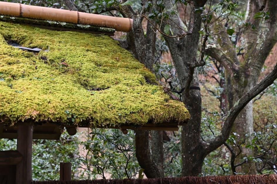 東慶寺の苔